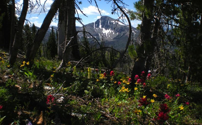 Mount Doane YNP